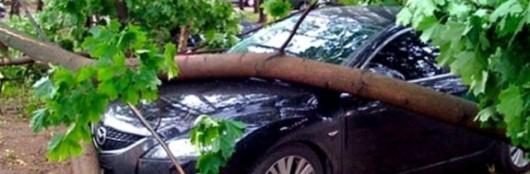 Что делать, если на ваш автомобиль упало дерево или вы не можете получить наследство? Юристы отвечают на вопросы